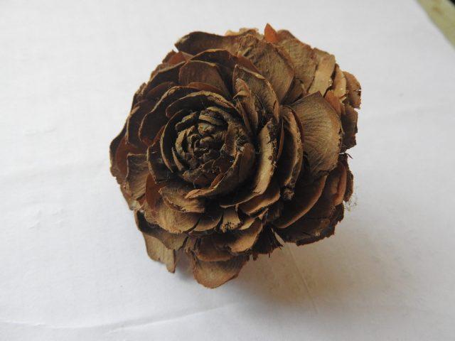 Dried rose Flower.