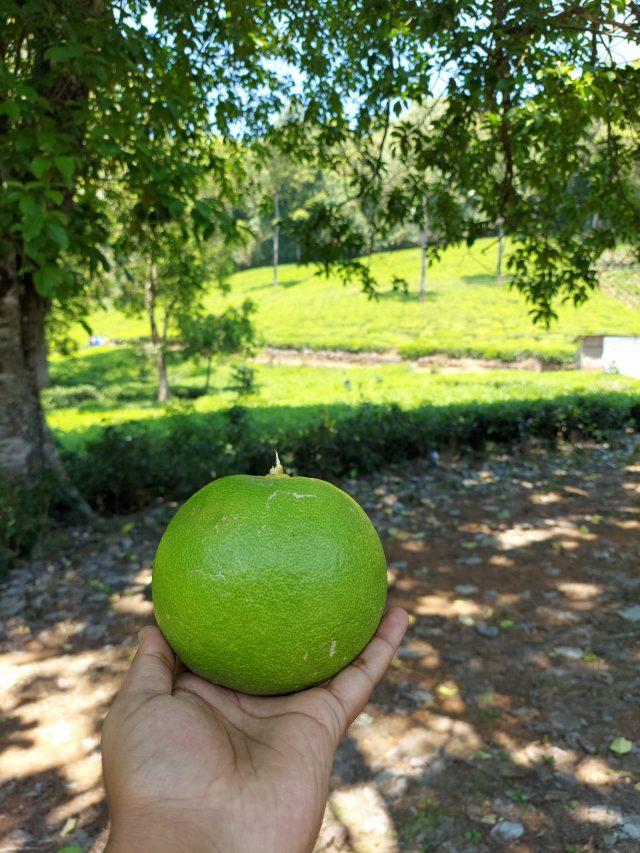 Fruit in hand