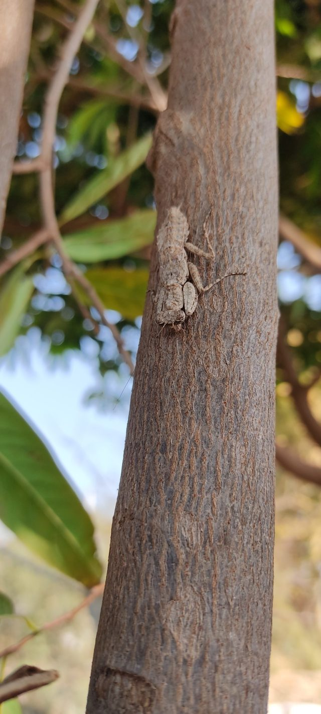 Insect on the tree trunk