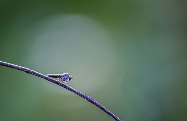 Insect on twig