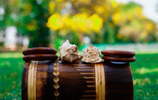Seashells on a wooden roll