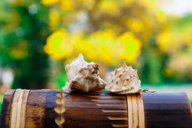 Shells on wooden mug