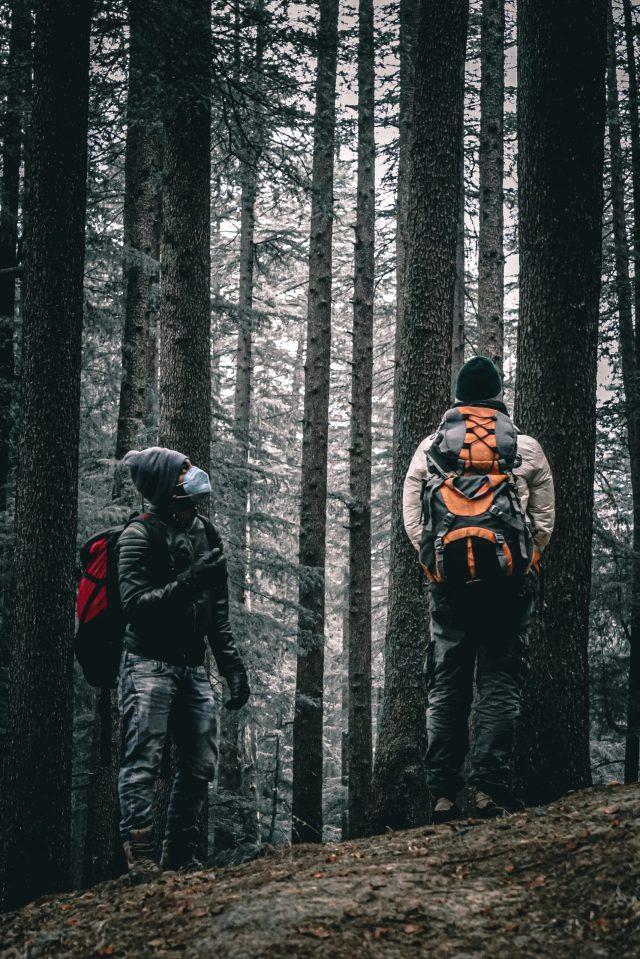 Tourists in a dense jungle