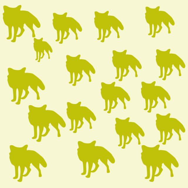 A fox illustration
