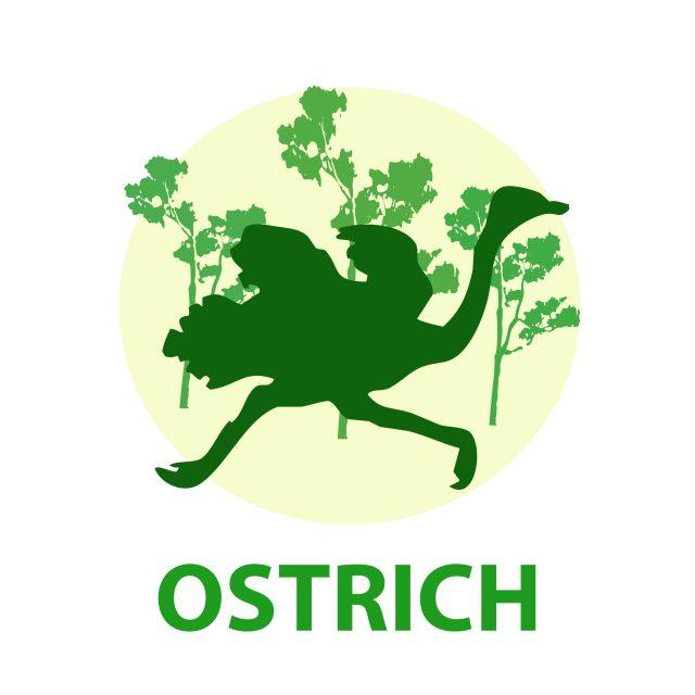 An ostrich illustration