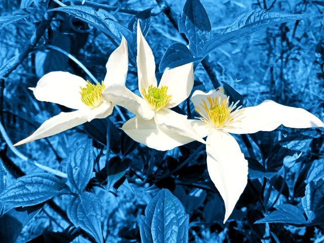 White flowers and leaves