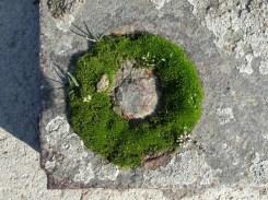 Mooskringel auf Stein by Lakritze