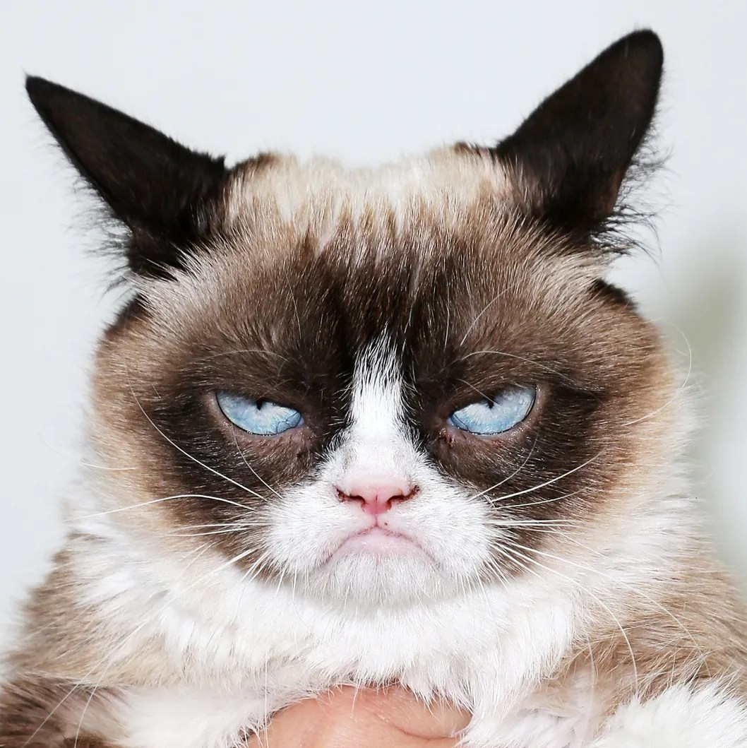 """The Grumpy Guide To Life: Observations By Grumpy Cat"" Book Launch Party"
