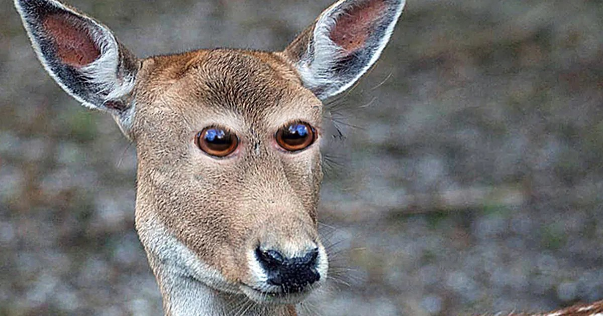 Animals With Eyes At The Front