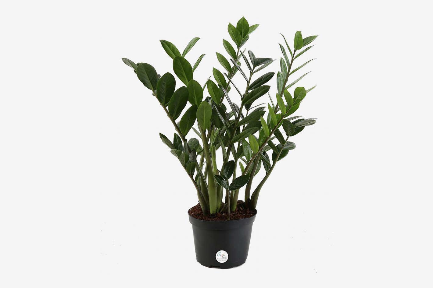 Ideal Indoor Plants