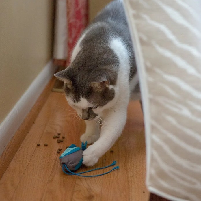 Doc & Phoebe's Cat Co. Indoor-Hunting Cat-Feeder Kit