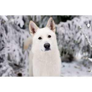 Idyllic Ir Meanings Almanac Full Wolf Moon January Amid C