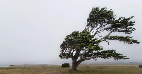 It's Too Windy