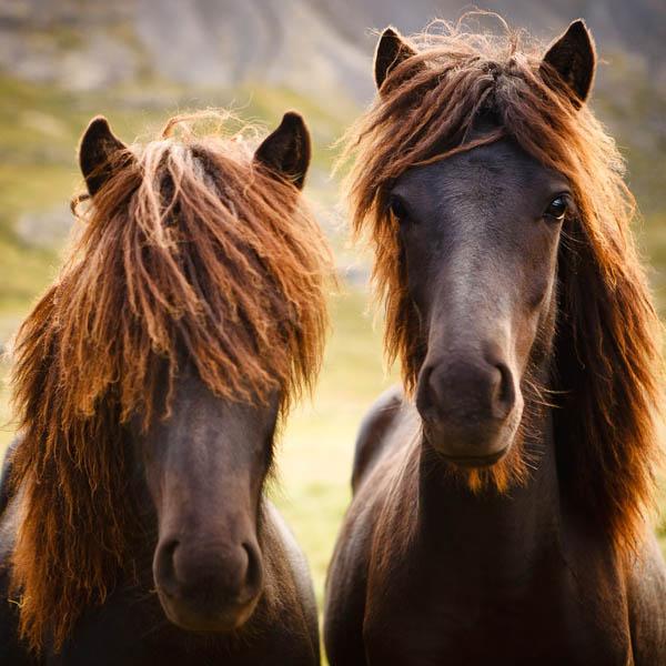 wild_horses_18