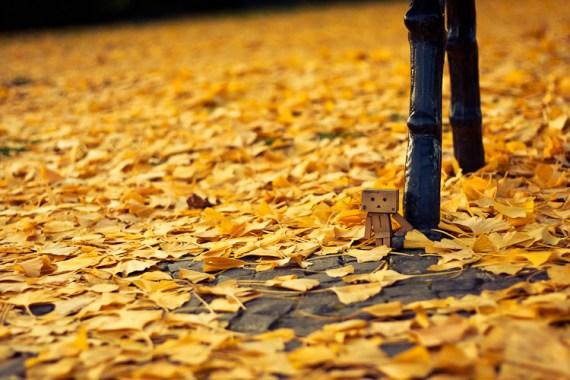 Danbo im Herbst