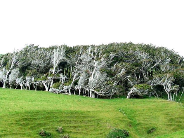 drvece-3