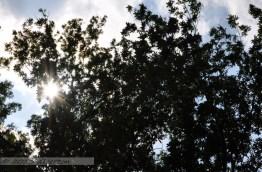 06.27 - Into the Sun