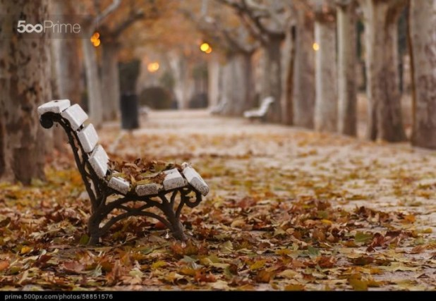 stock-photo-the-colours-of-autumn!-58851576