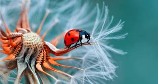 macro photography tips and tutorial