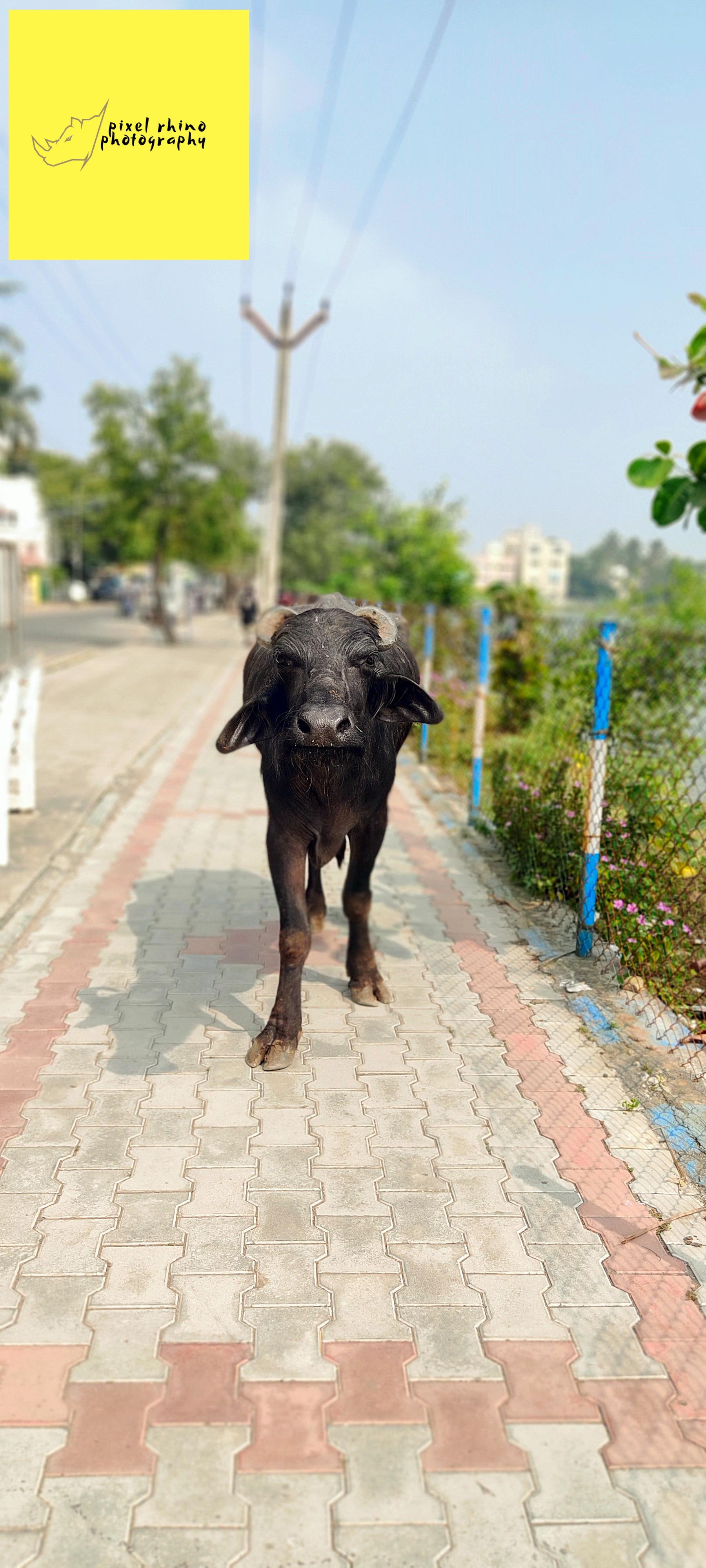 Animal Photography