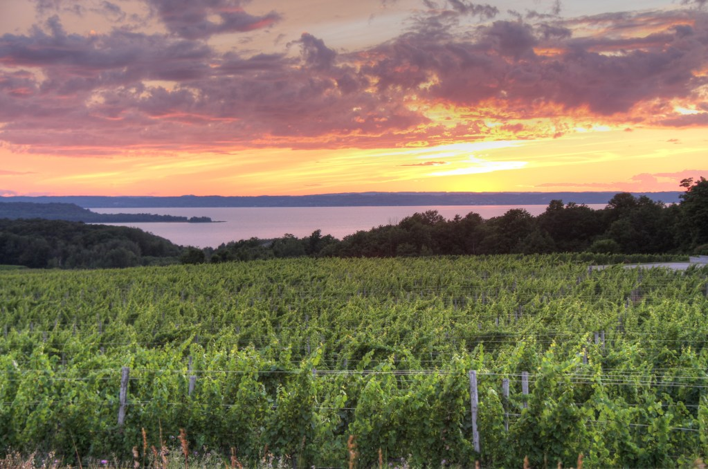 Sunset over the traverse city vineyard
