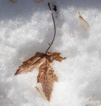 The remains of fall