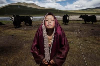 Nomadic Life Threatened on the Tibetan Plateau