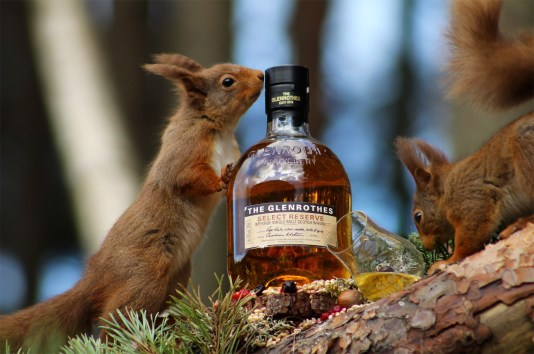 new squirrel multi pic