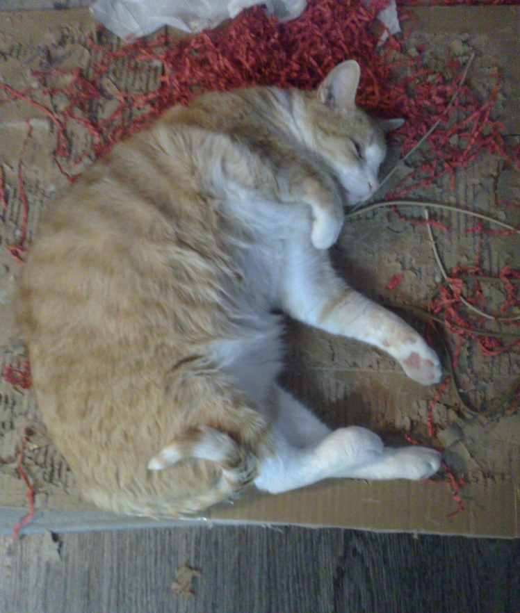 Photo of our mascot, Pixel J. Cat, lying in repose on top of some cardboard and red crinkly paper grass