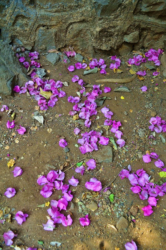 Flowers strewn on soil