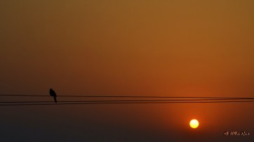 Pigeon silhouttte against a rising sun in Kausani