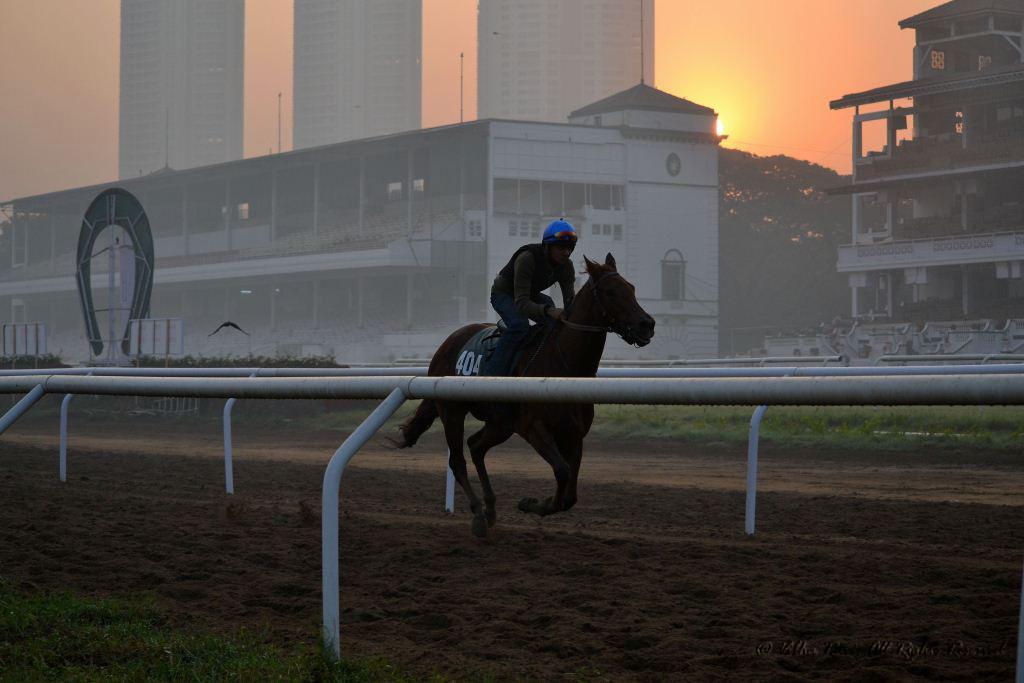 Horse and trainer against Mumbai skyline backdrop at Mahalaxmi or Mahalakshmi Race Course