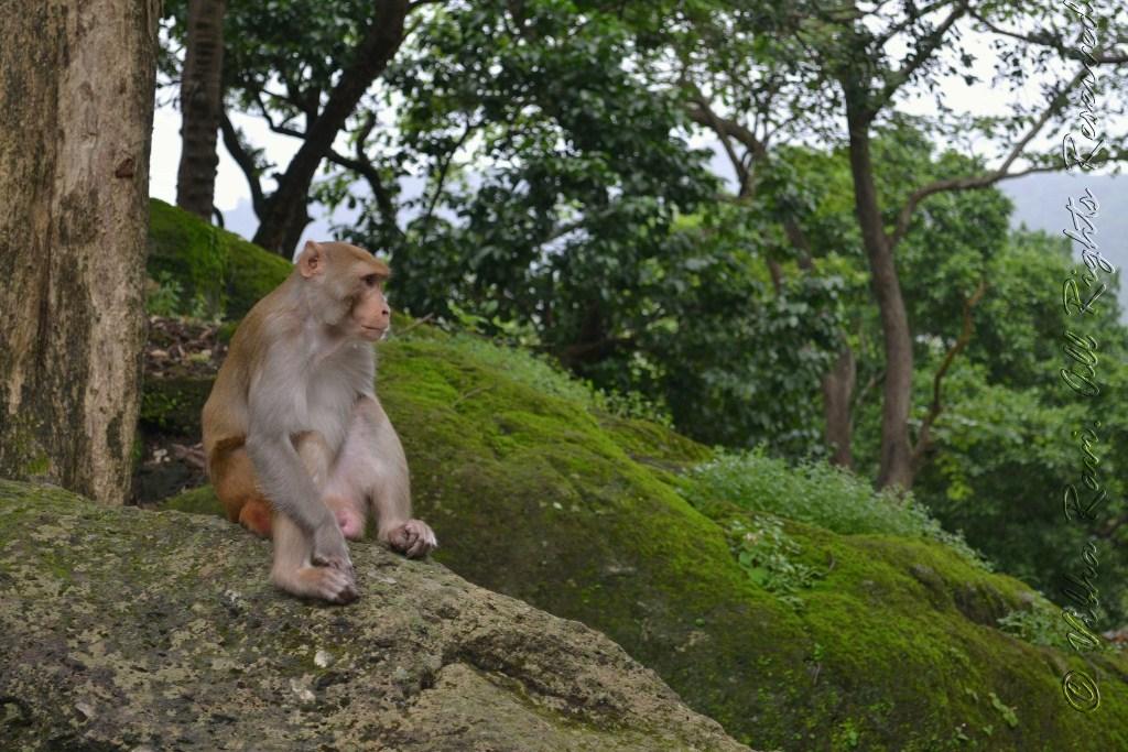 Monkey sits peacefully at Borivali National Park