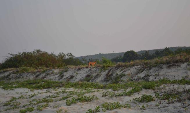 A lone ranger on Tarkarli beach