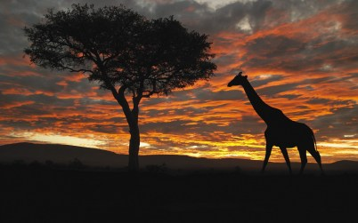 A giraffe against a spectacular East African sunset. Image credit: Rough Guides