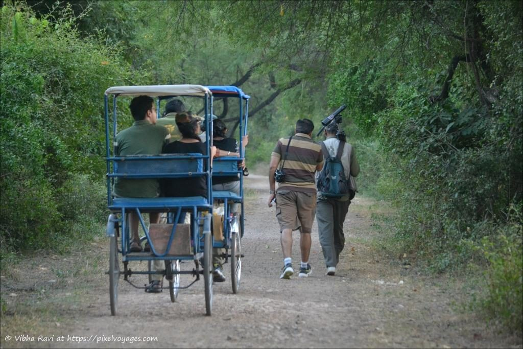 Rickshaws at Bharatpur Bird Sanctuary