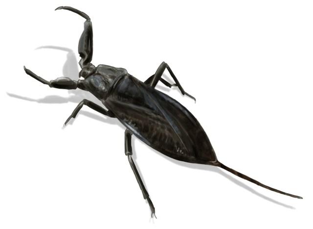 1200 534429141 water scorpion