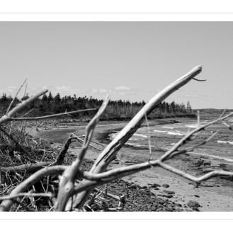 Le long de la plage -Along the beach