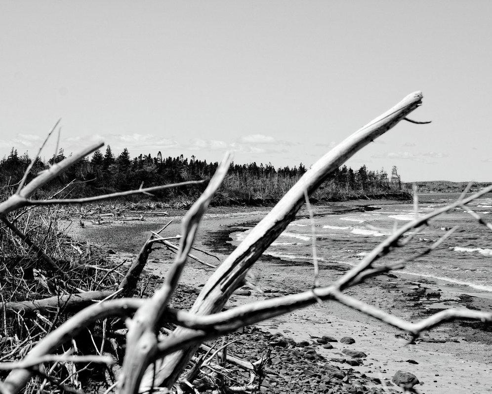 Le long de la plage - Along the beach