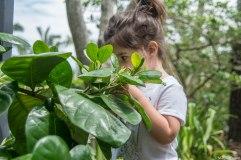 Catching Olive smelling Gardenisas