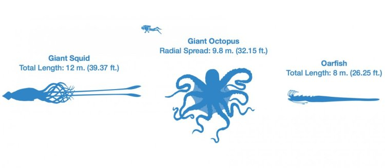 octopus-size-chart-comparison