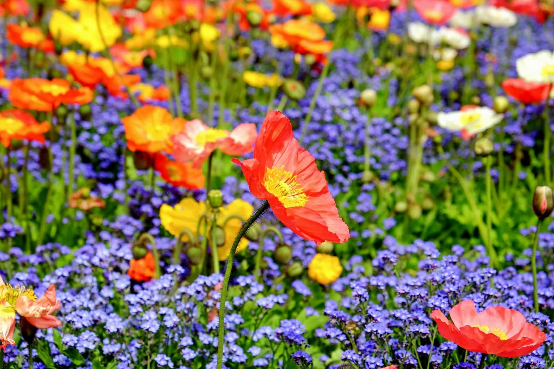 Free Picture Summer Leaf Meadow Petal Flora Nature