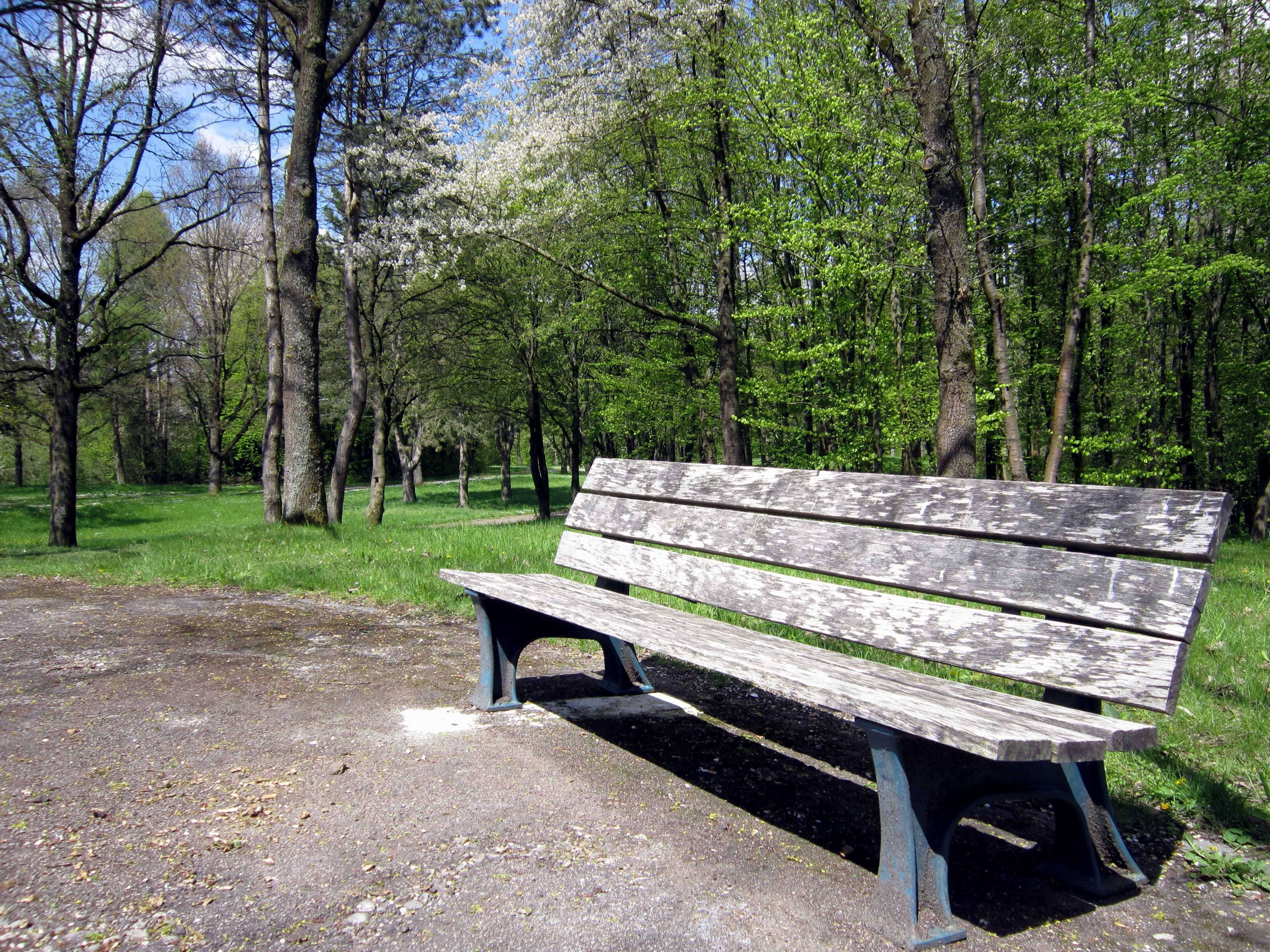 Free Picture Tree Bench Nature Summer Wood Landscape