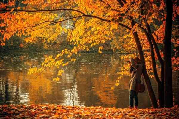 Безкоштовна картинка: деревини, листя, дерево, природи ...
