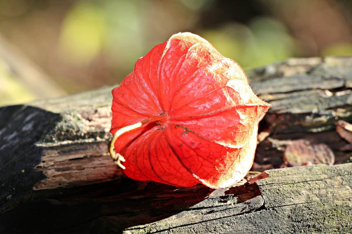 Free Picture Wood Nature Red Ecology Leaf Plant Outdoor