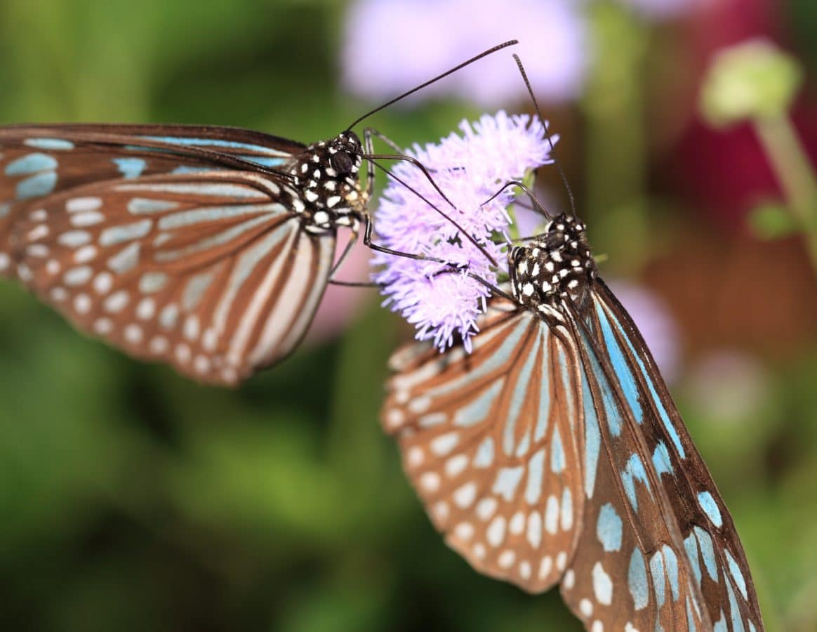 Free Picture Insect Colorful Butterfly Summer