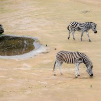 A Zeal of Zebras