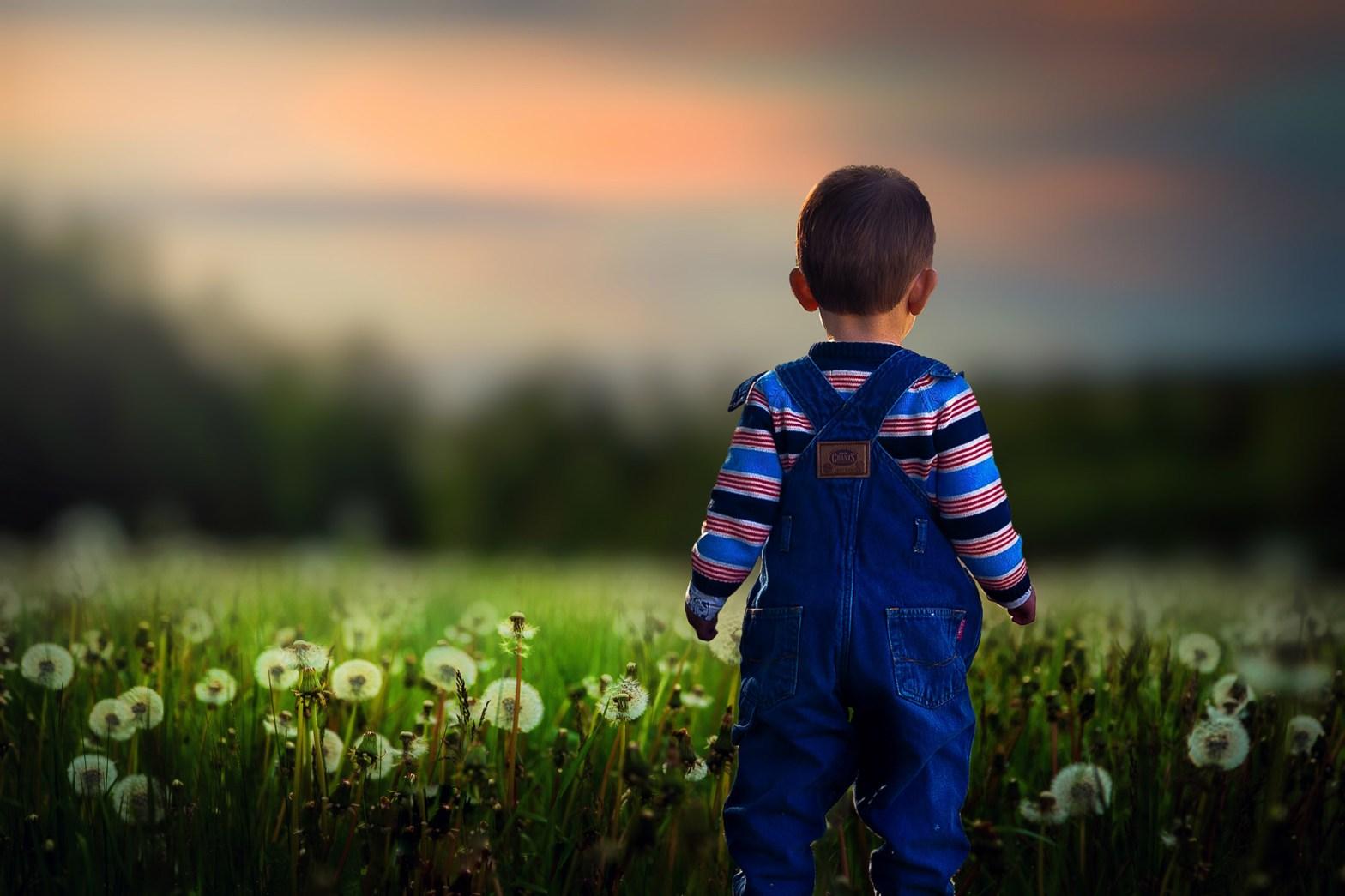 liten pojke står bland maskrosor vid ett fält i solnedgången