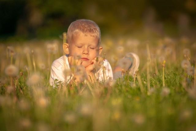 Liten pojke ligger i gräset bland torkade maskrosor