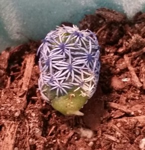 Even the cactus sprung a root!